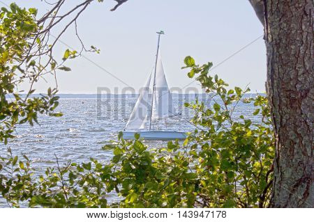 Sailing Boat In The Middle Of A Lake Behind Some Trees