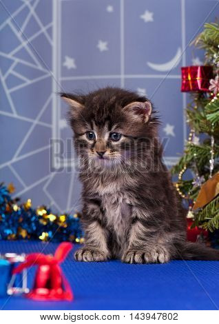 Cute fluffy kitten near Christmas spruce with gifts and toys over blue background