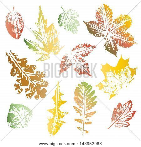 Collection of autumn colors leaves imprints isolated on white background