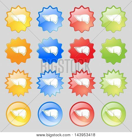 Liver Icon Sign. Big Set Of 16 Colorful Modern Buttons For Your Design. Vector