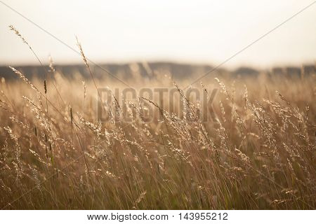 Dry grass meadow in the sunset light. Evening landscape.