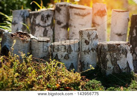 birch wooden stumps for landscape decoration in the park.