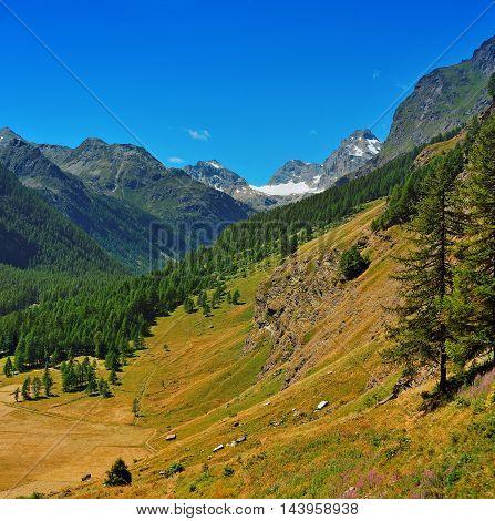 Alpien valley in Gran Paradiso National Park Valle dAosta