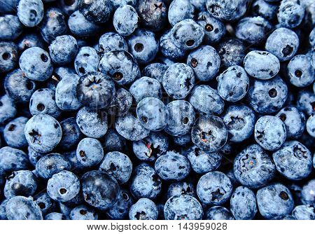 Top view shot of natural, freshly picked blueberries. Organic, eco friendly food for healthy lifestyle. A lot of berries as background. Selective focus, soft edge, bright deep colors, close-up shot.