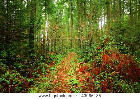 a picture of an exterior Pacific Northwest forest trail in fall