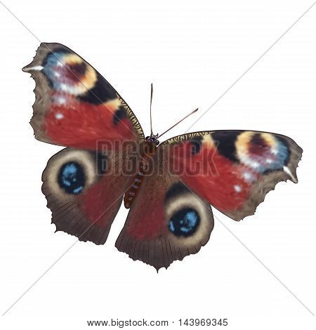 Vector realistic illustration of European Peacock butterfly. Inachis io. Isolated on white background. Summer and greeting card design element.
