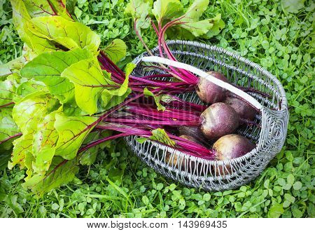 Fresh beet on a the grass in a wicker basket