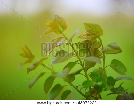 Beautiful green leaves. Shallow depth of field