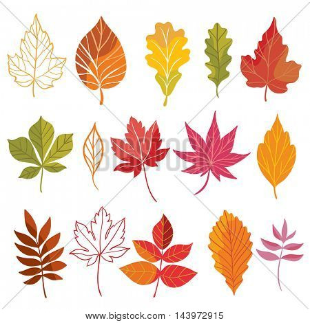 vector autumn leaves set