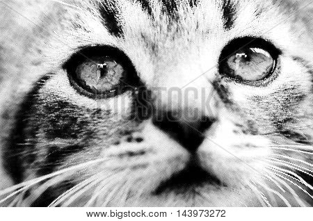 Digital generated halftone image with portrait of a cat.