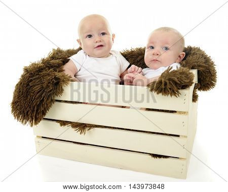 Two baby boys sitting together in a blanket-lined wooden crate.  On a white background.
