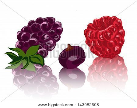 berries isolated on white backgraund. vector illustration EPS10