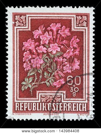 ZAGREB, CROATIA - JULY 03: stamp printed by Austria, shows Alpen Rose (Rhododendron hirsutum), circa 1948, on July 03, 2014, Zagreb, Croatia