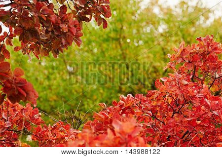 Autumn leaves in frame outdoor with blurred background
