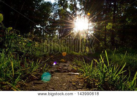 Forest path with fallen leaves in the sunlight. View from the bottom.