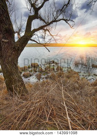 Cloudy weather over the lake at sunset. Dry reed and old branches at foreground