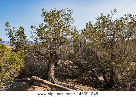 Mojave Desert Trees And Brush