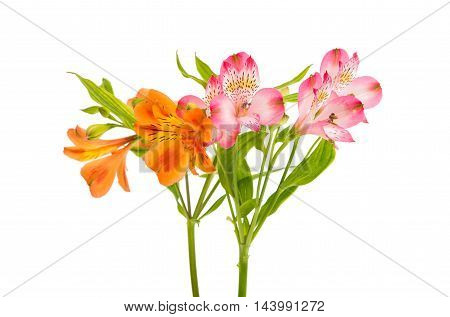 Alstroemeria flower bouquet on a white background
