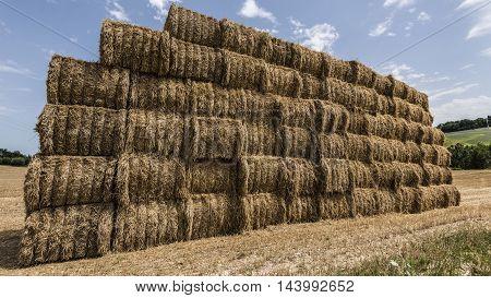 hai bales pile in a field blue sky background closeup