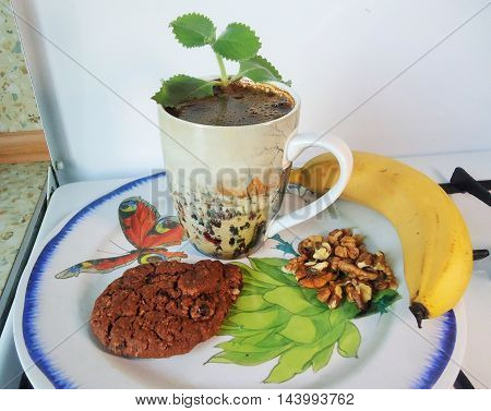 Breakfast. Morning black coffee with cookies, banana and walnuts (a dish with a reproduction Felix Brakemon