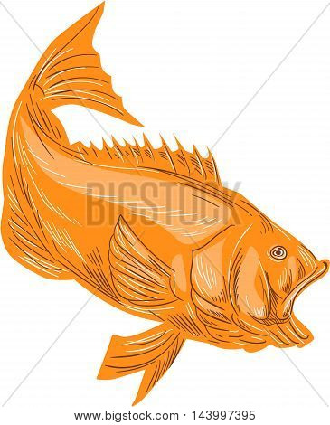 Drawing sketch style illustration of a largemouth bass fish diving viewed from the side set on isolated white background.
