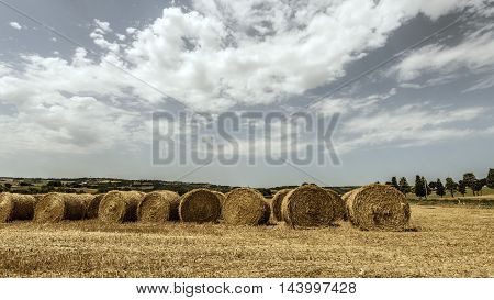 cylindrical hay bales line in a field