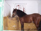 stock photo of feedlot  - A horse having a snack suprised by the paparazzi  - JPG