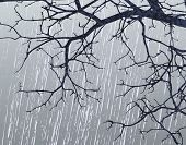 picture of sleet  - Illustration of bare branches in winter weather - JPG