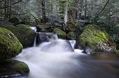 River cascading over moss-covered boulders, in ancient temperate rainforest.  Yarra Ranges, Victoria