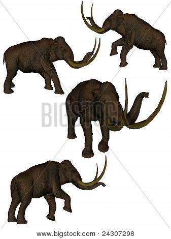 Set Of Four Mammoths.