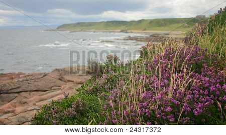 Heather on the coast