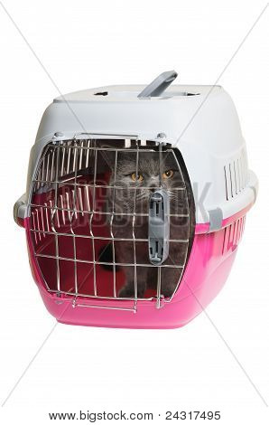 Pet carrier with cat