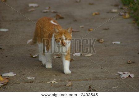 October Cat