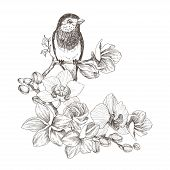 Vector Illustration Of Bird And Flowers, Line Drawings, Ink Drawing, Hand Drawn Illustration On Whit poster