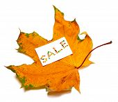 Autumn Dried Maple-leaf And White Price Card With Word Sale Composed Of Autumnal Maple Leaves. Isola poster
