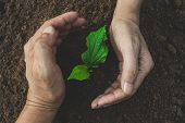 Hand Of Person Protection Growing Young Plant On Fertile Soil For Agriculture Or Save Earth,nature C poster