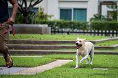Aggressive Rabies Labrador Dog Bite Man poster
