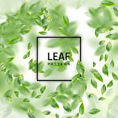Green Leaf  Realistic 3d Background. Creative Lush Greenery Summer Pattern With Ficus Leaves Or Tea  poster