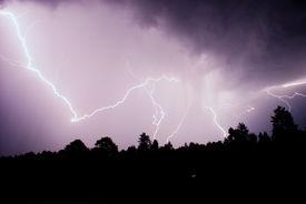 pic of lightning bolt  - Lightning strikes down in the night forest - JPG