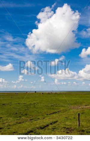 Ameland Meadow