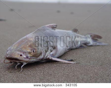 Fish From Jaco