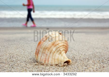 Sea Shell And Silhouette