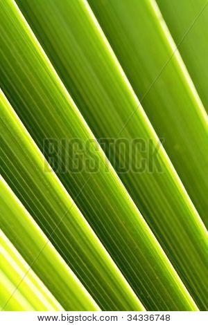 Vegetation Textures Scene