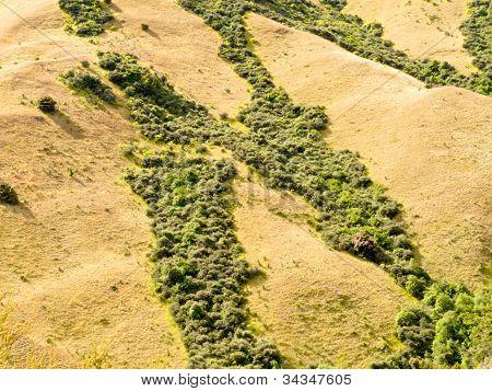 Network of green veins in dry grassland in NZ