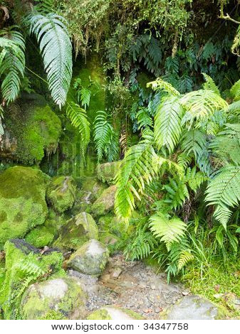Spore forming plants, mossy rocks and lush ferns