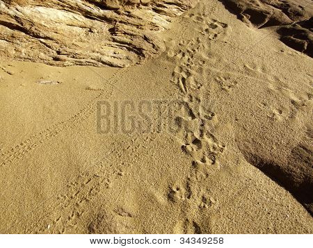 Small Bug And Animal Footprints In Sand