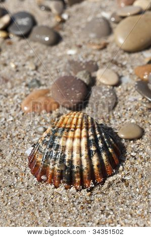 A colorful shell on send.