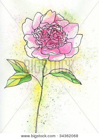 Painted watercolor pink peony