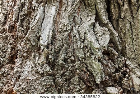 Surface Of The Bark