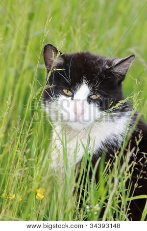White black cat on meadow